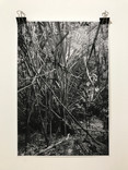Photographic print, 48 x 33 cm