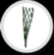 EnviroTurfSF_edited.png