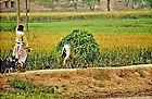 Pakistan1901.jpg
