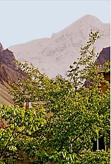 Pakistan4481 (2).tif