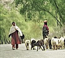Pakistan4411.tif