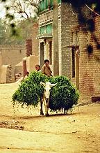 Pakistan1911.jpg