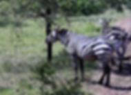 Ethiopien3491.JPG