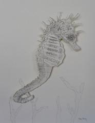 Stipple Sea Horse