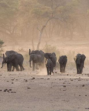 herd Eles Hwange.jpg