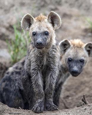 simbavati_safari_lodges_wildlife_16.jpg