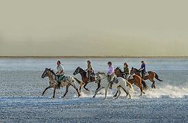 Horseback Arica.jpg