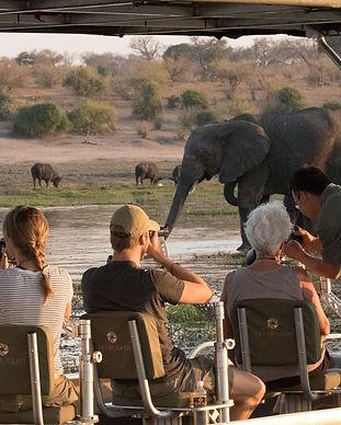Photographic safari.jpg