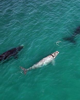 Whales De hoop.jpg