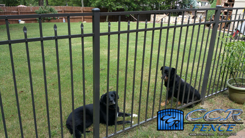 Fence-to-Keep-Dogs-In.jpg