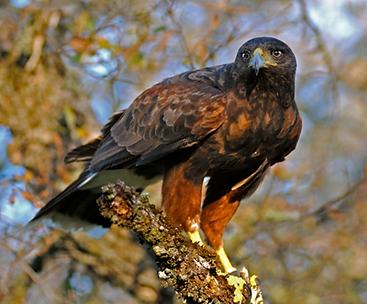 Louer activité de fauconnerie - Location vacances de luxe Alentejo Villas au Portugal