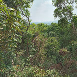 Land for sale in Coorg
