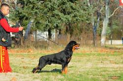 hunter ritter von camelot haus of nikomedia 29