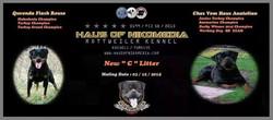 C LITTER HAUS OF NIKOMEDIA (8)