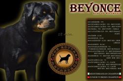 BEYONCE HAUS OF NIKOMEDIA (1)