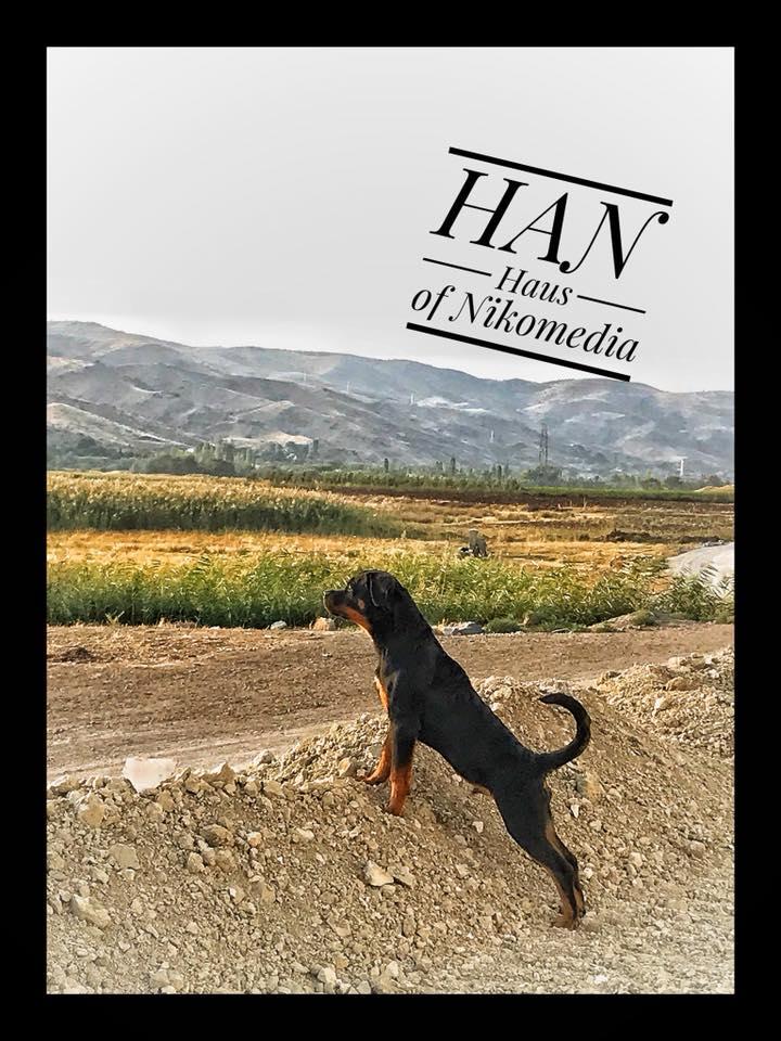 HAN HAUS OF NIKOMEDIA (14)