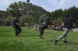 hunter ritter von camelot haus of nikomedia 17