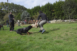 hunter ritter von camelot haus of nikomedia 15
