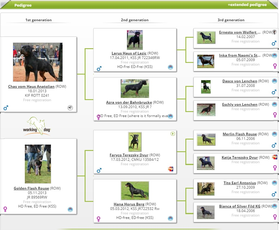 WORKING DOG HIROSHIMA HAUS OF NIKOMEDIA (2)