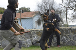 hunter ritter von camelot haus of nikomedia 12