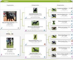 WORKING DOG HAVIN HAUS OF NIKOMEDIA (2)