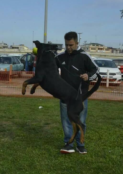 black jack haus of nikomedia (8)