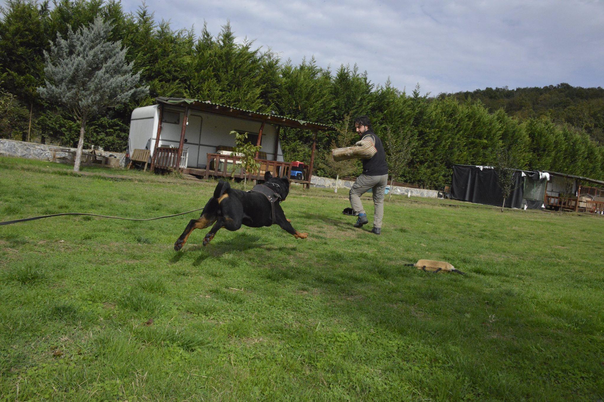 hunter ritter von camelot haus of nikomedia 14