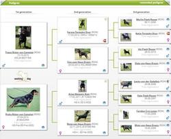 WORKING DOG HUNTER RITTER VON CAMELOT (2)