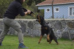 hunter ritter von camelot haus of nikomedia 10