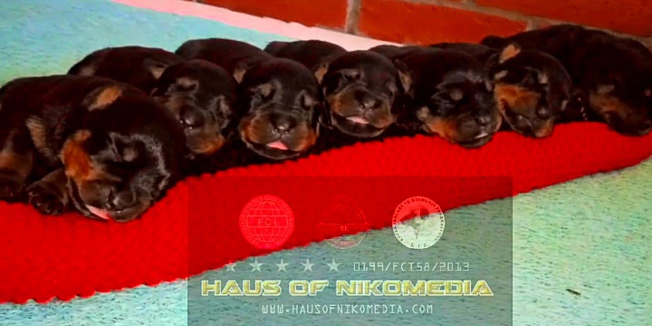 H2 LITTER HAUS OF NIKOMEDIA  (8)