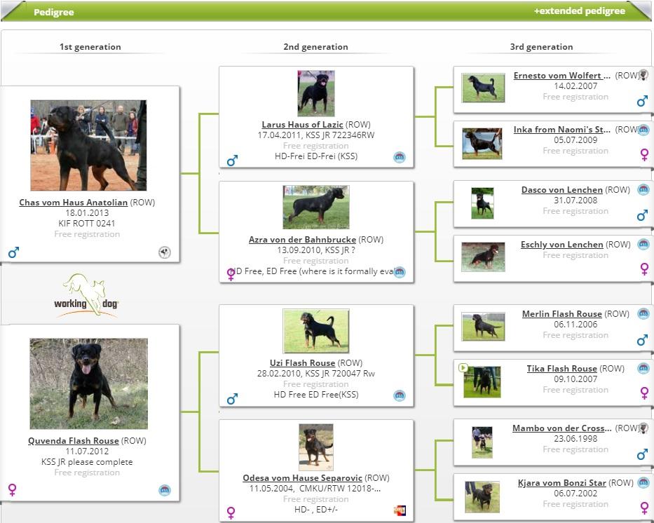 WORKING DOG CAPRICE HAUS OF NIKOMEDIA (2