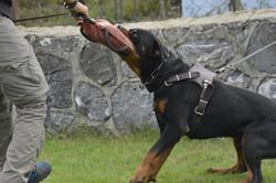 hunter ritter von camelot haus of nikomedia 6