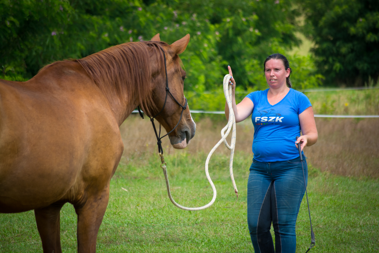 Problémás lovakkal való foglalkozás