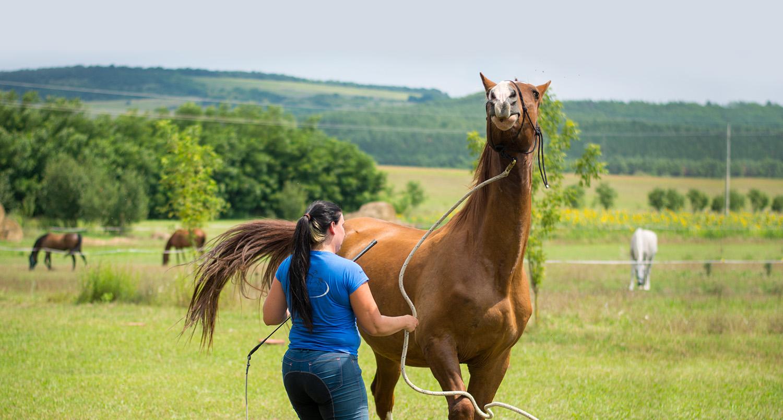 Problémás lóval való foglakozás