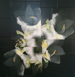 Lilien weiss-gelb