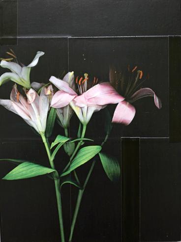 Lilien rosa