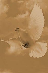 dove3_edited_edited_edited.jpg