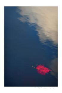 Red Flight