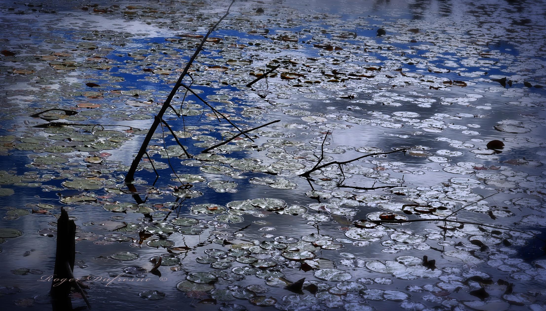 Le Marais Bleu ref DSC_2288