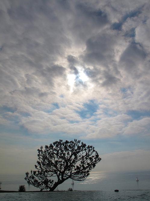 Black tree and sky.