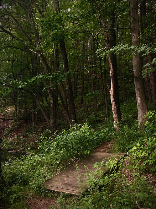 Wooded Forest Path.