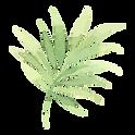 Tropical Leaves 2