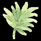Tropische Blätter 2