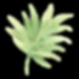 熱帯の葉2