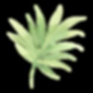 Foglie tropicali 2