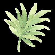 Chinese Herbal Medicine Mullumbimby