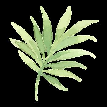 Les feuilles tropicales 2