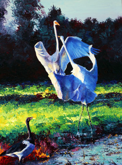 Battling Egrets