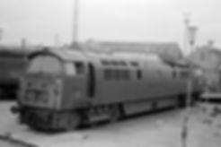 D1001.jpg