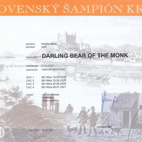 Darling Bear of the Monk - SK Champion